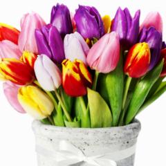 С 8 марта, наши дорогие девушки!